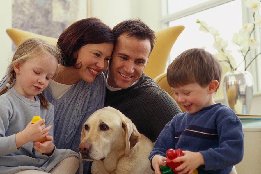 como-decorar-casa-con-mascota
